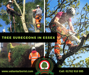 Tree Surgeons in Essex | Valiant Arborist Ltd.