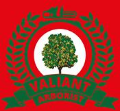Best Tree Cutting Service In Essex | Valiant Arborist